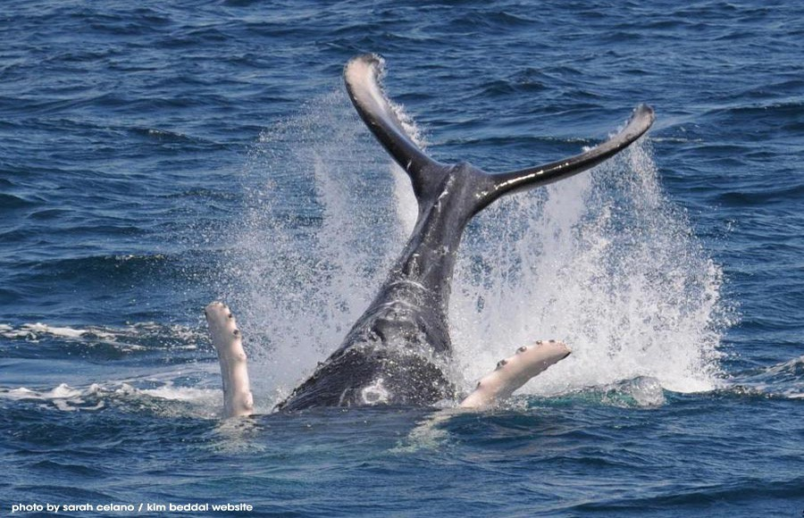 Whale Watching Tours cost on average $60 US per person.