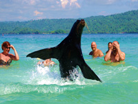 Swimming with Sea Lions in Samana Bay at Cayo Levantado Island... Attractions and Things To Do in Samana, swim with a sea lion in the ocean at famous Cayo Levantado ( Bacardi Island )